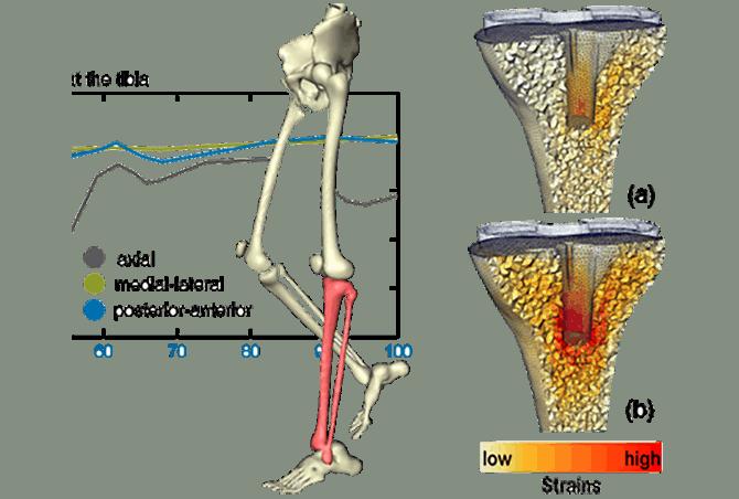 3D-Modelle: Mehr als nur Form